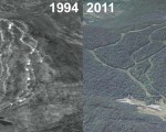 Balsams Wilderness Aerial Imagery, 1994 vs. 2011